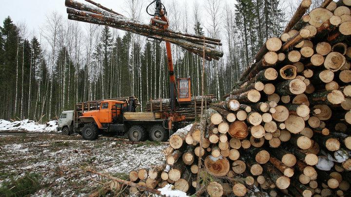 Заготовка леса в Архангельской области